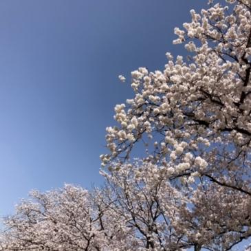 金沢店の8周年祭、ありがとうございました♪